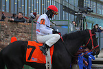 January 18, 2016: #7 Black Ops before the running of the Smarty Jones Stakes at Oaklawn Park in Hot Springs, AR. Justin Manning/ESW/CSM