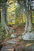 """""""Autumn's Stairway"""" <br /> <br /> Fall leaves paint the trail along the stairway to Autumn. This rugged trail is off the main portage near Curtain Falls; Boundary Waters Canoe Area Wilderness."""