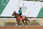 RIYADH, SA February 19 2021: RED VERDON (USA) Track work from King Abddulaziz Racetrack, Riyadh, Saudi Arabia. Shamela Hanley/Eclipse Sportswire/CSM