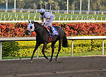 06 February 2010:  Court Vision with jockey Robby Albarado in the The Gulfstream Park Handicapp Stakes the Ninth race at Gulfstream Park in Hallandale Beach, FL.