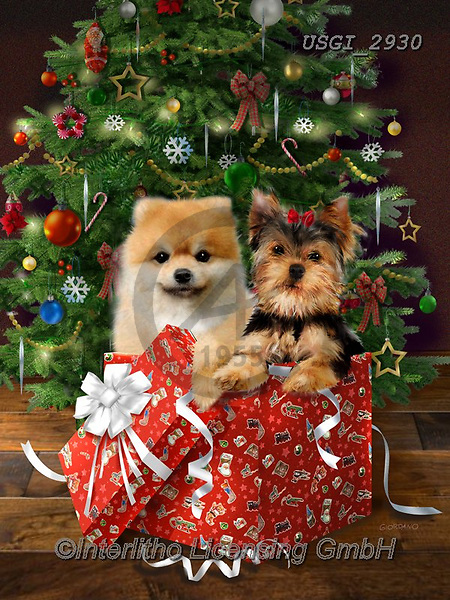 GIORDANO, CHRISTMAS ANIMALS, WEIHNACHTEN TIERE, NAVIDAD ANIMALES, paintings+++++,USGI2930,#xa# ,dog,dogs