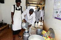 KENIA, County Kakamega, Bukura, ATDC Agricultural Technology Development Center, dairy farm, milking  / Milchviehhaltung, Melken
