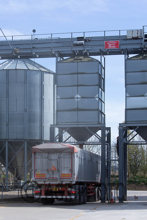 26-4-2021 Grain lorry being loaded with feed wheat.<br /> ©Tim Scrivener Photographer 07850 303986<br />      ....Covering Agriculture In The UK....