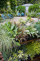 Display table of specialty plants at entrance to Digging Dog Nursery