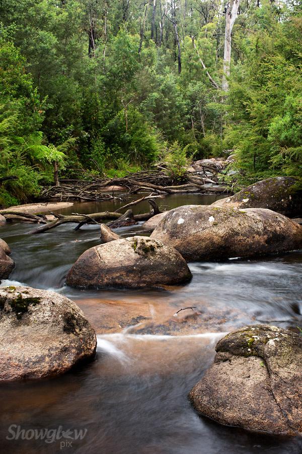 Image Ref: W024<br /> Location: Murrindindi Scenic Reserve<br /> Date: 04 Jan 2014