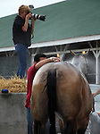 May 31, 2015 Media tries to cover American Pharoah from every possible angle. American Pharoah (ridden by Georgie Alvarez) galloped on a rainy, overcast day at Churchill Downs during a special workout period for Belmont Stakes horses.  He flies to New York on June 2.  ©Mary M. Meek/ESW/CSM