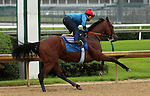 June 01, 2015 American Pharoah (ridden by Martin Garcia) worked on a rainy, overcast day at Churchill Downs during a special workout period for Belmont Stakes horses.  He flies to New York on June 2.  ©Mary M. Meek/ESW/CSM