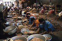INDIA Karnataka, women sort cashewnut in factory in Mudbidri / INDIEN, Moodbidri, Frauen sortieren Kaschunuesse in Fabrik