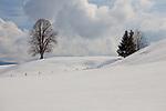Europa, DEU, Deutschland, Bayern, Oberbayern, Wildsteig, Landkreis Weilheim-Schongau, Winter, Schnee, Baum, Wolken, Natur, Umwelt, Landschaft, Jahreszeiten, Stimmungen, Landschaftsfotografie, Landschaften, Landschaftsphoto, Landschaftsphotographie, Wetter, Wetterelemente, Wetterlage, Wetterkunde, Witterung, Witterungsbedingungen, Wettererscheinungen, Meteorologie, Wettervorhersage, <br /> <br /> [Fuer die Nutzung gelten die jeweils gueltigen Allgemeinen Liefer-und Geschaeftsbedingungen. Nutzung nur gegen Verwendungsmeldung und Nachweis. Download der AGB unter http://www.image-box.com oder werden auf Anfrage zugesendet. Freigabe ist vorher erforderlich. Jede Nutzung des Fotos ist honorarpflichtig gemaess derzeit gueltiger MFM Liste - Kontakt, Uwe Schmid-Fotografie, Duisburg, Tel. (+49).2065.677997, ..archiv@image-box.com, www.image-box.com]