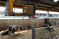 GERMANY, modern milk cow stable with automatic straw feeder / DEUTSCHLAND Koloniehof in Rickling , moderner heller Stall mit automatischer Stroheinstreuung , Milchviehhaltung