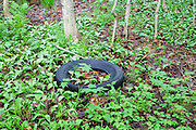 Abandoned tire in Kinsman Notch of the White Mountains, New Hampshire USA during the spring months.