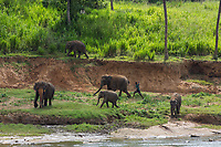 A mahout beats an elephant at the Pinnawala Elephant Orphanage in Sri Lanka.