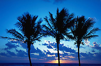 Sunrise under three palm trees, Palm Beach, Florida