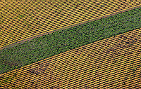 aerial photograph vineyard differing grape varieties Sonoma County, California