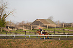 Alda, trained by H. Graham Motion, exercises in preparation for the Breeders' Cup Juvenile Fillies Turf at Keeneland 11.03.20.