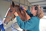 Sarah Borrey Brushing Horse