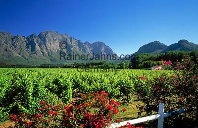 "South Africa, near Cape Town, Winelands Franschhoek valley: wine estate ""Klein Champagne"""