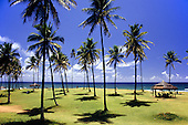 Itaparica Island, Bahia State, Brazil; perfect palm trees with perfect shadows and the sea beyond.