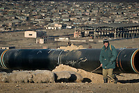 Rustavi, Georgia, 08/12/2004..Construction on the BTC pipeline and associated gas pipeline. A shepherd leads his flock past piping on the BTC right of way.....