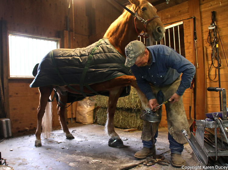 """Farrier Todd Graham from Chehalis, Wash., adjusts the band over the top of See My Magic, a 13 year old Tennessee Walking Horse, in Roy, Wash. after putting on his horse shoes.  Graham, who has been a horseshoer for 20 years, says its like trimming fingernails. He is the only farrier currently in Western Washington who will put show shoes on horses. """"There's not very many of those around anymore,"""" he says of the performance show riders. He says people got out of it because its expensive to keep these horses and many riders got sick of the regulations. (photo © Karen Ducey / Animal News Northwest)"""