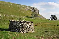 Stone wall tree protection, Malham Tarn, North Yorkshire......John Eveson, Dinkling Green Farm, Whitewell, Clitheroe, Lancashire. BB7 3BN.01995 61280. 07973 482705.j.r.eveson@btinternet.com.www.johneveson.com
