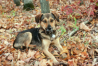 Puppy having a quiet moment in fall woods