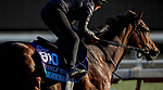 October 30, 2019: Breeders' Cup Juvenile Turf entrant Gear Jockey, trained by George R. Arnold II, exercises in preparation for the Breeders' Cup World Championships at Santa Anita Park in Arcadia, California on October 30, 2019. Carolyn Simancik/Eclipse Sportswire/Breeders' Cup/CSM
