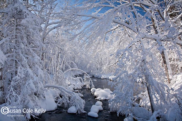 Alder Brook, Donnell Pond Preserve, Hancock County, ME