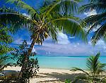 Bora Bora, French Polynesia   <br /> Coconut Palm trees (Cocos nucifera) on Matira beach<br /> with the tropocal waters of Bora Bora lagoon