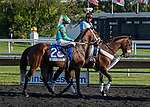 August 14, 2021: Glynn County #2, ridden by jockey Julian Leparoux in the post parade prior to the Mister D Stakes at Arlington Park Racecourse on August 14, 2021 in Arlington Heights, Illinois. Nicole Thomas/Eclipse Sportswire/CSM