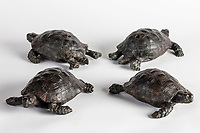 BNPS.co.uk (01202) 558833<br /> Pic: NT/JamesDobson/BNPS<br /> <br /> The four returned tortoises at Kingston Lacy, Dorset.<br /> <br /> Slow and steady wins the race...<br /> <br /> A set of bronze tortoises stolen from a country mansion have finally been returned... 29 years later.<br /> <br /> The bronze sculptures based on the wealthy 19th century owner's pet were stolen from Kingston Lacy in Dorset in 1992 and reported to the police but never found until a savvy historian spotted one up for auction recently.<br /> <br /> Following the trail, the National Trust traced the tortoise to an antiques dealer, who had acquired the set from a scrap metal dealer, completely unaware of their history.<br /> <br /> The four missing sculptures have finally been returned to Kingston Lacy and gone on display.