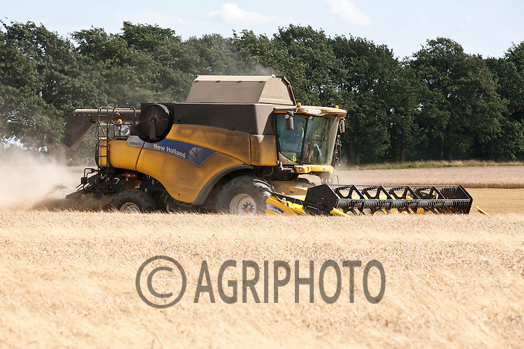 Harvesting Winter Wheat in Lincolnshire.Picture by Tim Scrivener date taken 18th August 2012.mobile 07850 303986 e-mail tim@agriphoto.com.....covering agriculture in The United Kingdom....