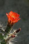 The Living Desert, CA. 3-12-12 Edit