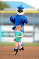 Dunedin Blue Jays on field promotion featuring the team mascot and a young fan base race during a game against the Tampa Yankees on April 11, 2013 at Florida Auto Exchange Stadium in Dunedin, Florida.  Dunedin defeated Tampa 3-2 in 11 innings.  (Mike Janes/Four Seam Images)
