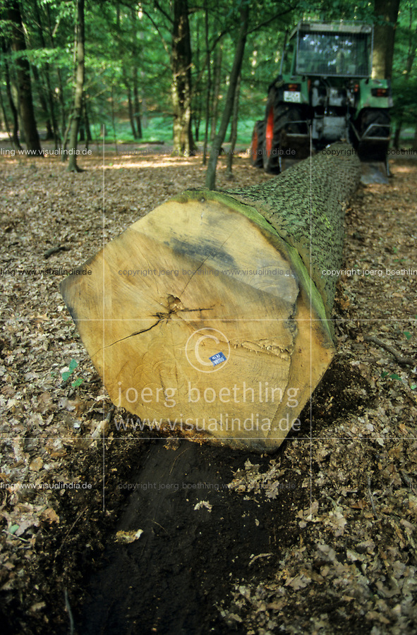 GERMANY, forestry, oak timber harvest / DEUTSCHLAND, Staatsforst bei Trittau, Forstwirtschaft, Holzernte, gefällter Eichenstamm wird mit einem Traktor geschleppt
