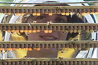 Stephanie Rack, 28 years old, Thônes in Haute-Savoie, producer of organic royal jelly, inspecting a frame of royal cells before harvesting the royal jelly.///Stéphanie Rack, 28 ans, Thônes en Haute-Savoie, Productrice de gelée royale Bio. Inspecte un cadre de cellules royales avant la récolte de la gelée royale.
