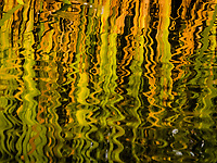 "Rippling water distorts the cattail grass bordering the pond in a neightborhood park knows as ""The Duck Pond"".  Abstract art created on a fall afternoon."