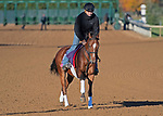 November 4, 2020: Spanish Loveaffair, trained by trainer Mark E. Casse, exercises in preparation for the Breeders' Cup Juvenile Fillies Turf at Keeneland Racetrack in Lexington, Kentucky on November 4, 2020. Jessica Morgan/Eclipse Sportswire/Breeders Cup