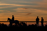 November 5, 2020: War Of Will, trained by trainer Mark E. Casse, exercises in preparation for the Breeders' Cup Dirt Mile at Keeneland Racetrack in Lexington, Kentucky on November 5, 2020. Alex Evers/Eclipse Sportswire/Breeders Cup