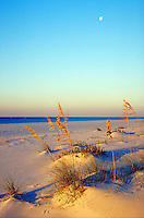 Deserted beach on Gulf of Mexico. ocean, coast, seashore, plants, scenic. Gulf Shores Alabama United States.