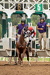 """ARCADIA, CA  SEPTEMBER 27:  #6 Leucothea, ridden by Norberto Arroyo, Jr., stumbles at the start of the Chandelier Stakes (Grade l) """"Win and You're In Breeders' Cup Juvenile Fillies Division"""", on September 27, 2019, at Santa Anita Park in Arcadia, CA. (Photo by Casey Phillips/Eclipse Sportswire/CSM)"""