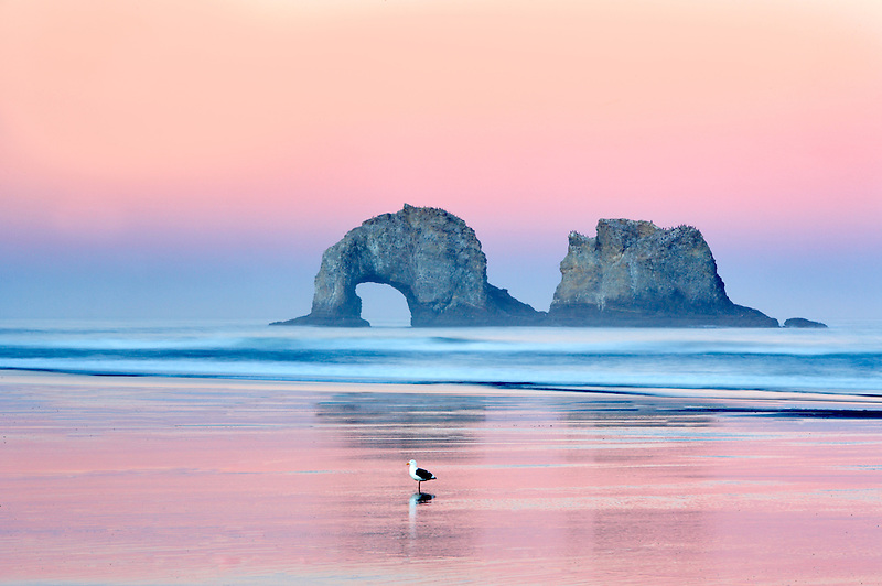 Seagul on beach with Arch Rock. Rockaway Beach. Oregon