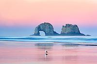 Seagul on beach with Arch Rock. Rockaway Beach. Oregon