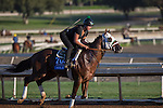 OCT 29 2014:Mr Z, trained by Wayne Lukas, exercises in preparation for the Breeders' Cup Juvenile at Santa Anita Race Course in Arcadia, California on October 29, 2014. Kazushi Ishida/ESW/CSM
