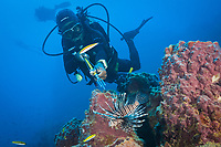 Invasive Lionfish speared by Diver, Pterois volitans, Caribbean Sea, Dominica