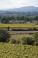 Europe/France/Languedoc-Roussillon/30/Gard/ Saint-Siffret: Paysage  viticole aux alentours de Saint-siffret en fond les Cévennes