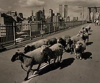 Sheep on Brooklyn Bridge