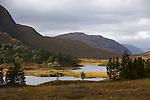 pins d'Ecosse de la forêt de Coulin dans le Glen Torridon