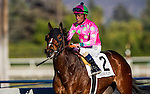 Fashion Plate with jockey Gary Stevens up defeats Streaming and Martin Garcia to win the 2014 running of the Las Virgenes Stakes at Santa Anita Park in Arcadia, California on February 1,  2014.