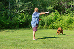 Fox red Labrador retriever responds to the trainer's hand signal.